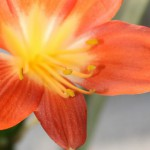 floare…