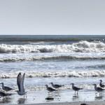 aripa mării…