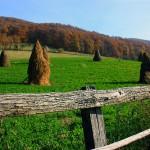 iarba verde de acasă